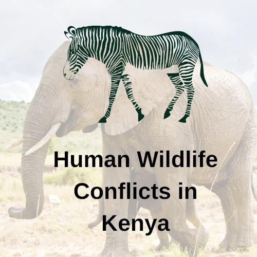 Postgrado de Conflictos entre comunidades humanas y la vida silvestre en África del Este