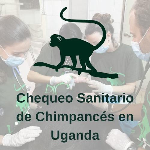 Chequeo Médico-Veterinario de Chimpancés