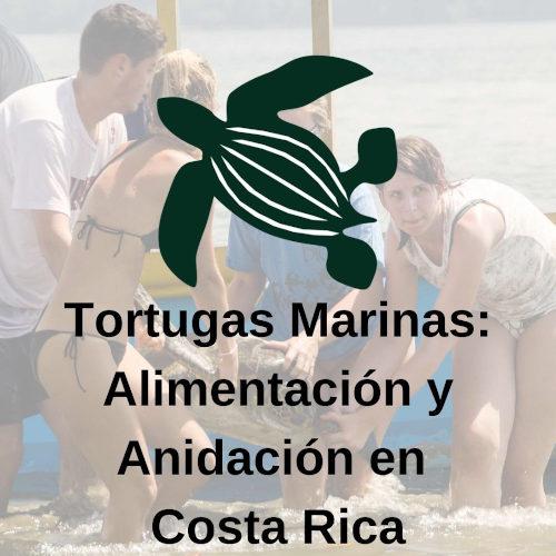 Tortugas Marinas I: Estudio y Conservación de Tortugas Marinas: Anidación y Alimentación