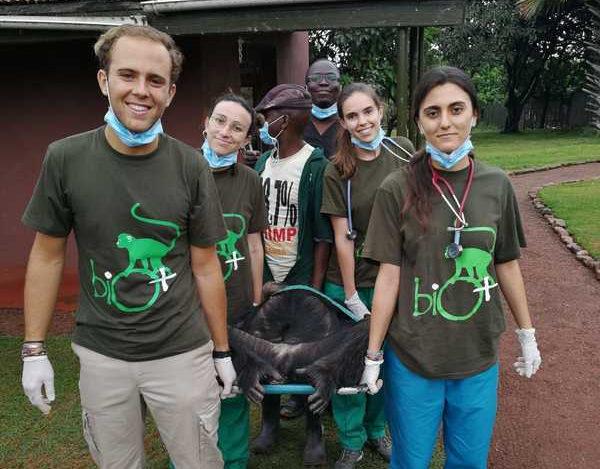 Chequeo Médico-Veterinario de Chimpancés en Uganda